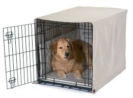 crate trained golden