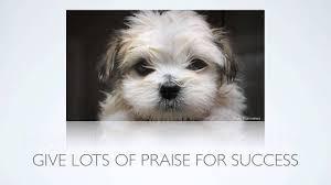 praise for success