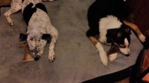 Colt and Juno